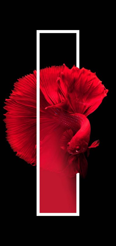Red Fish Black Minimal Wallpaper 1440x3040 380x802