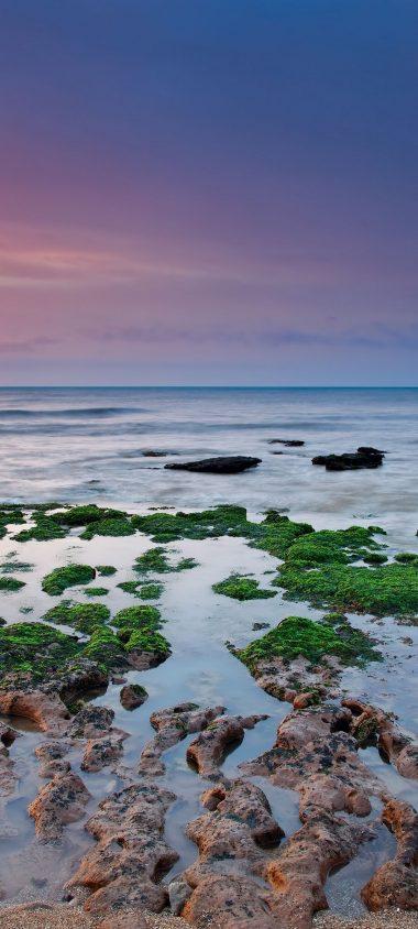 Reefs Moss Sea Rain Algae 1080x2400 380x844