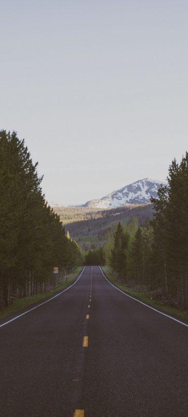 Road Trees Marking 1080x2400 380x844