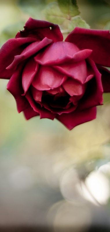Rose Bud Red Blur Wallpaper 1440x3040 380x802