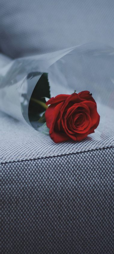 Rose Sofa Furniture 1080x2400 380x844