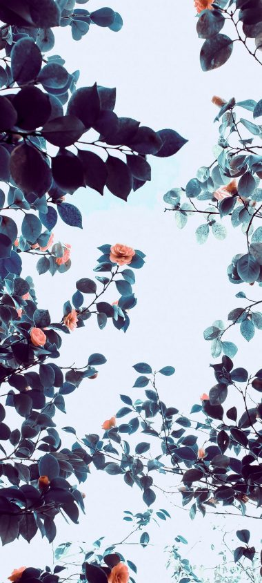 Roses Flowers Trees Branches 1080x2400 380x844