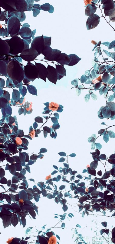 Roses Flowers Trees Branches Wallpaper 1440x3040 380x802