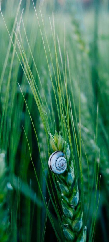 Snail Macro Shell 1080x2400 380x844