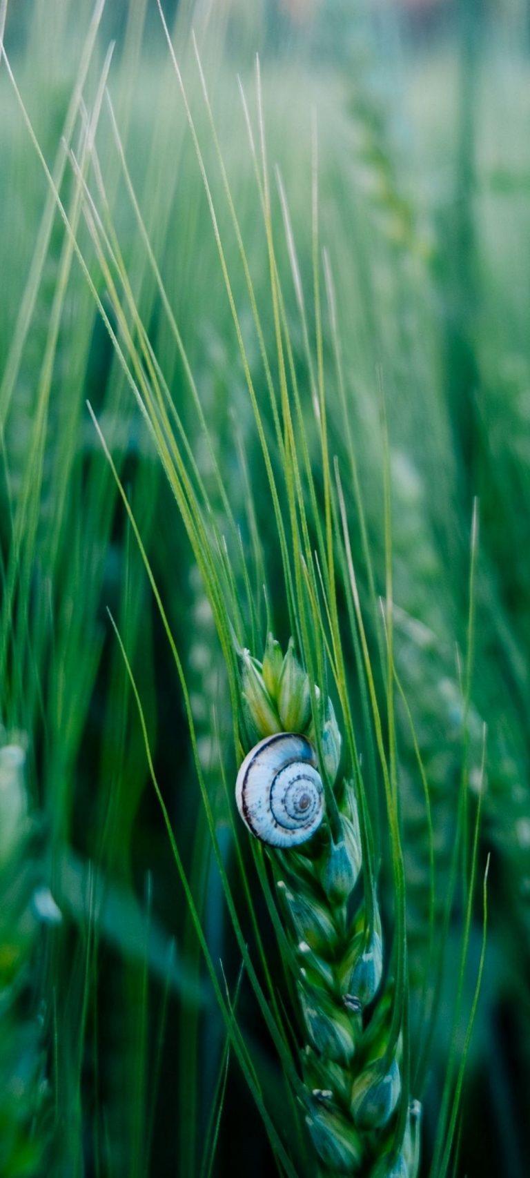 Snail Macro Shell 1080x2400 768x1707