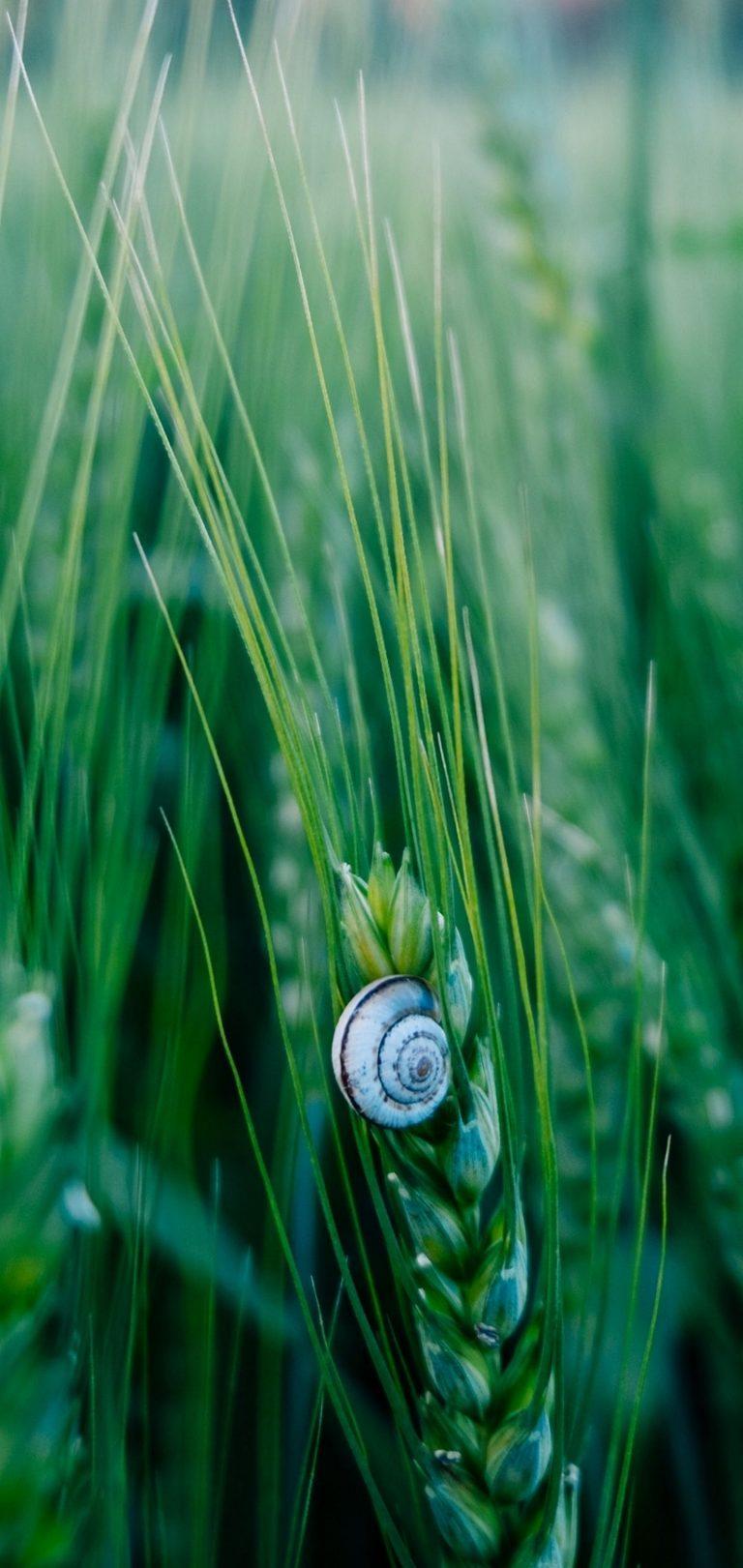 Snail Macro Shell Wallpaper 1440x3040 768x1621