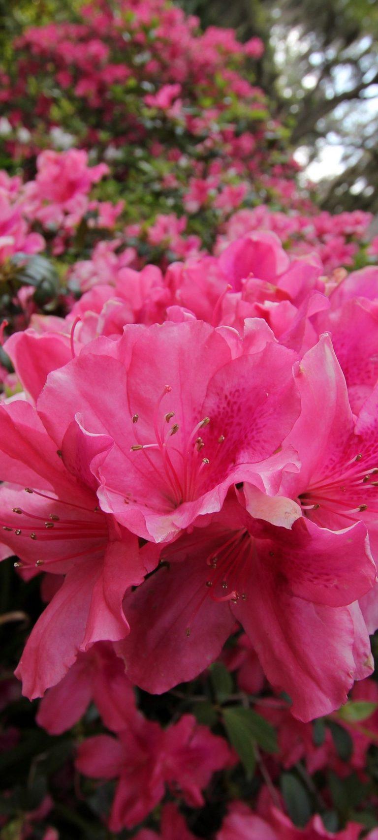 Tenderness Flowers Pink Grass Green Meadow 1080x2400 768x1707