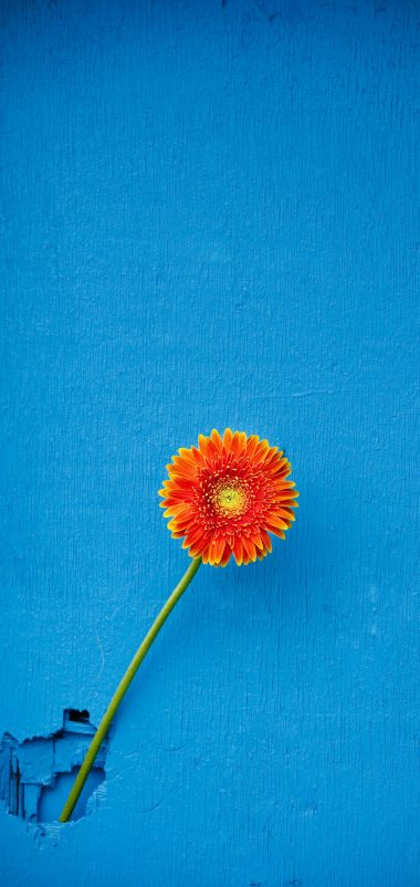 Texture Back Orange Flower Wallpaper 1440x3040 380x802