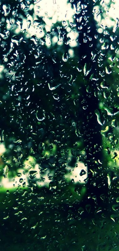 Trees Drops Glass Wallpaper 1440x3040 380x802