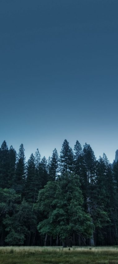 Trees Forest Mountains Usa California 1080x2400 380x844