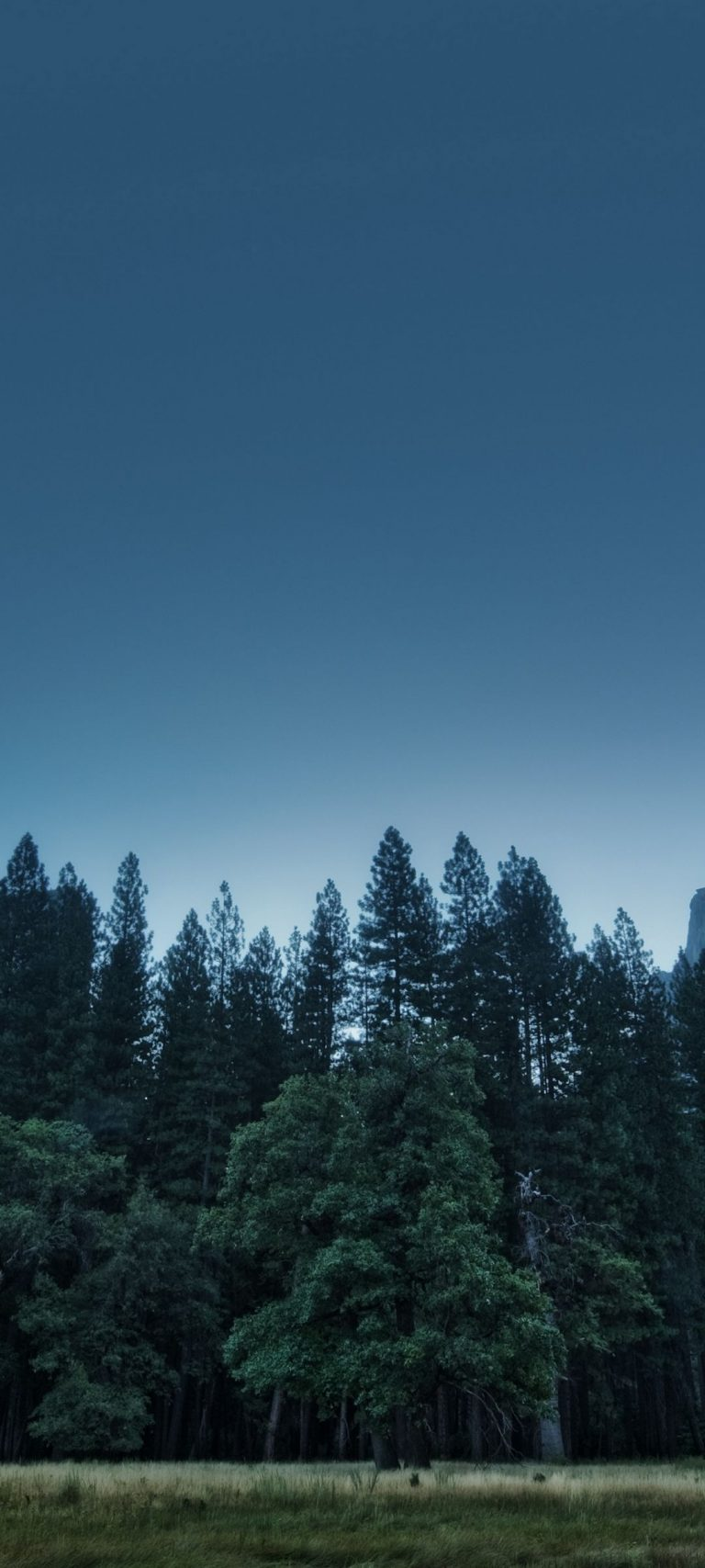 Trees Forest Mountains Usa California 1080x2400 768x1707