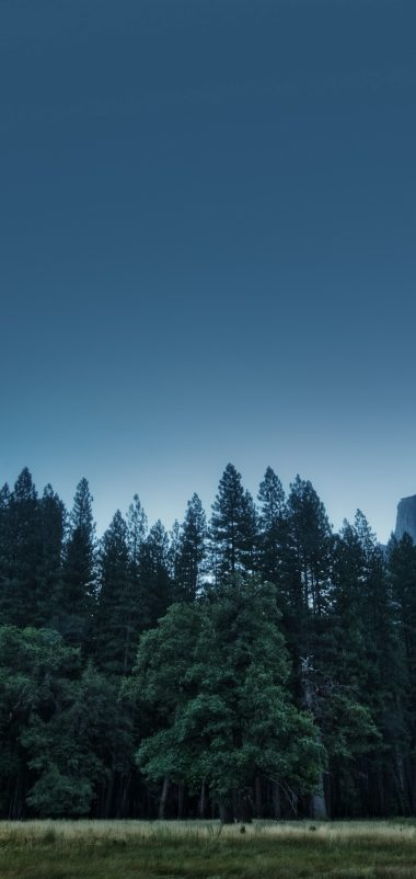 Trees Forest Mountains Usa California Wallpaper 1440x3040 380x802