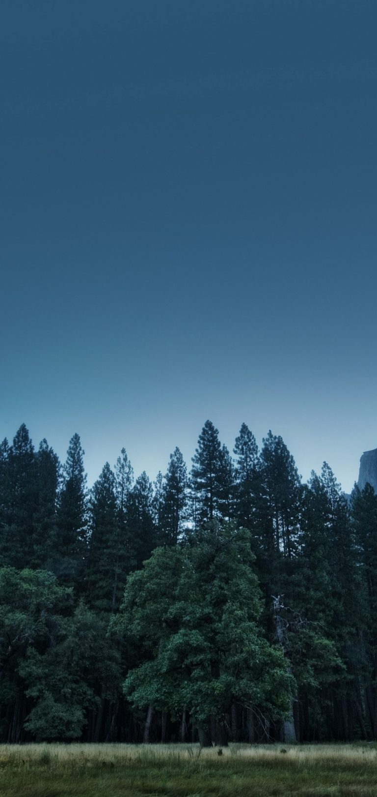 Trees Forest Mountains Usa California Wallpaper 1440x3040 768x1621