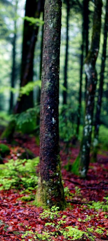 Trees Moss Bark Forest 1080x2400 380x844