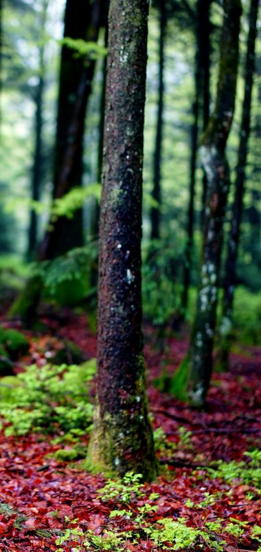 Trees Moss Bark Forest Wallpaper 1440x3040 380x802