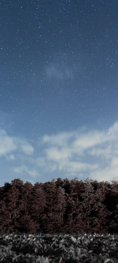 Trees Sky Stars Clouds 1080x2400 380x844