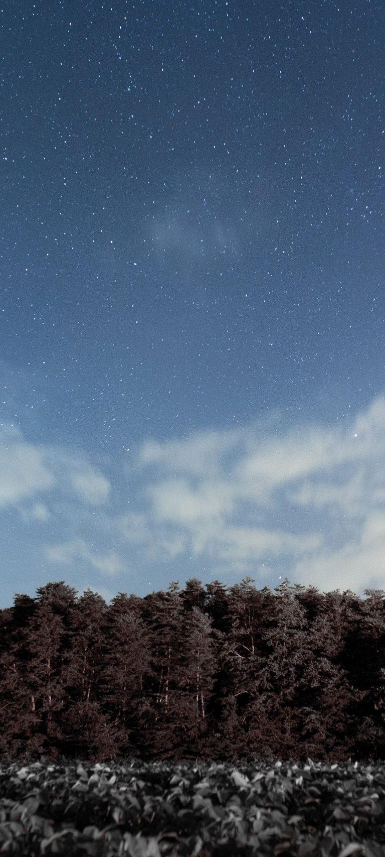Trees Sky Stars Clouds 1080x2400 768x1707
