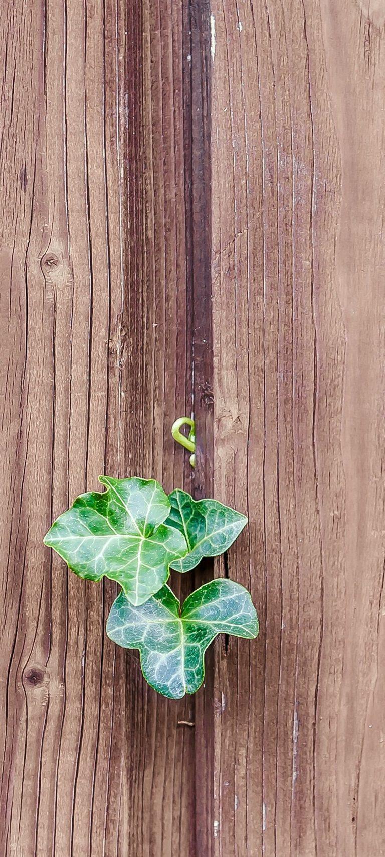 Walls Fences Boards Leaves Plants 1080x2400 768x1707