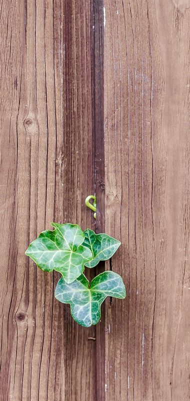 Walls Fences Boards Leaves Plants Wallpaper 1440x3040 380x802