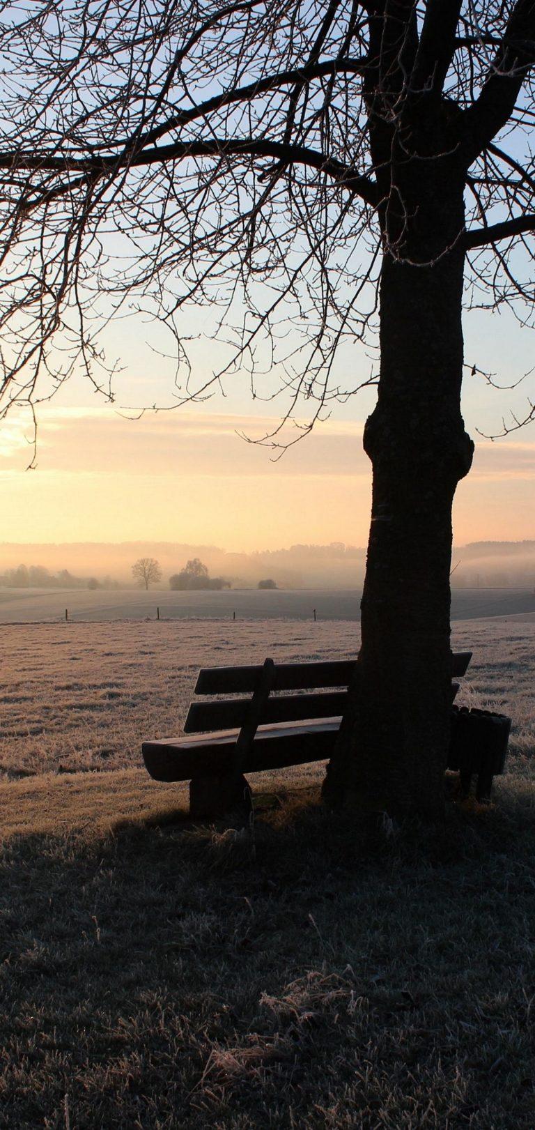 Winter Bench Frost Wallpaper 1440x3040 768x1621