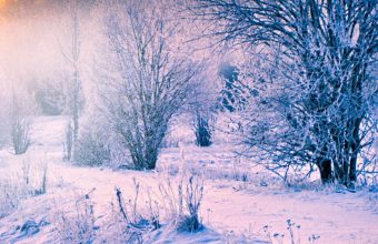 Winter Snow Forest Trail Wallpaper 1440x3040 340x220