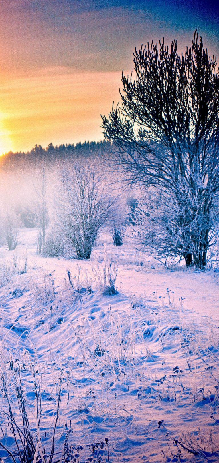 Winter Snow Forest Trail Wallpaper 1440x3040 768x1621