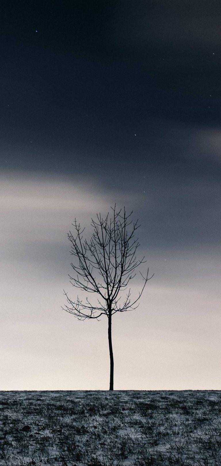 Winter Tree Sky Wallpaper 1440x3040 768x1621
