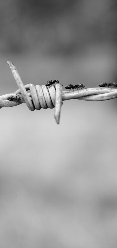 Wire Netting Ants Bw Wallpaper 1440x3040 380x802
