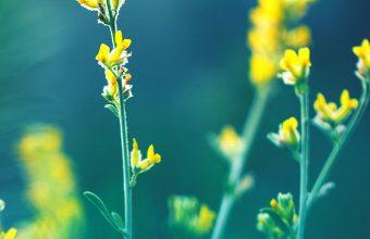 Yellow Flowers Blur Wallpaper 1440x3040 340x220