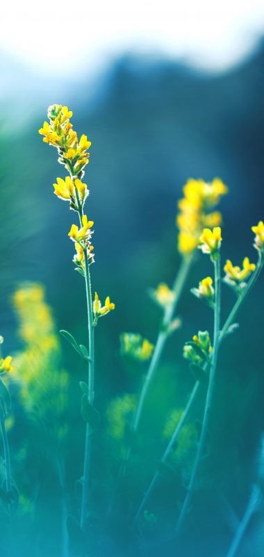 Yellow Flowers Blur Wallpaper 1440x3040 380x802
