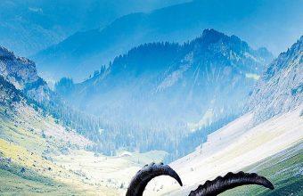 Animal Mountains Landscape 1080x2460 340x220