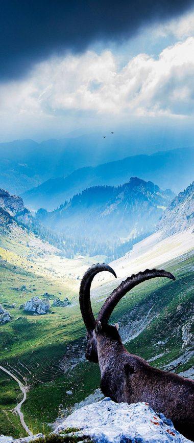 Animal Mountains Landscape 1080x2460 380x866