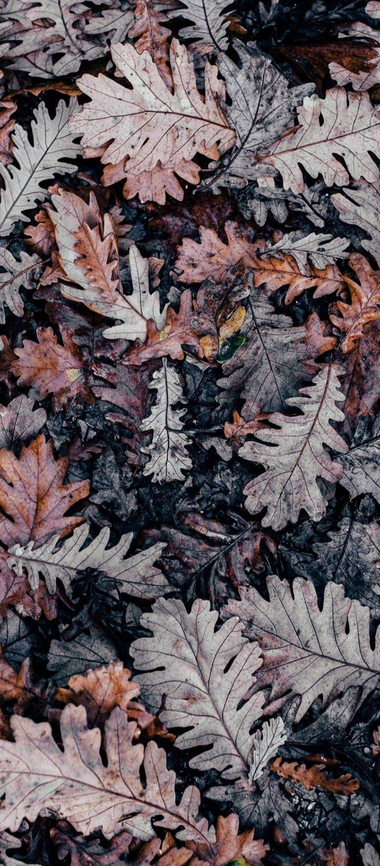 Autumn Leaves Brown 1080x2460 768x1749