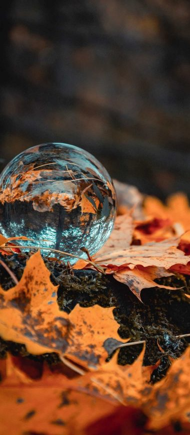 Ball Glass Autumn 1080x2460 380x866