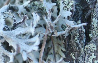 Bark Moss Tree Bright 1080x2460 340x220
