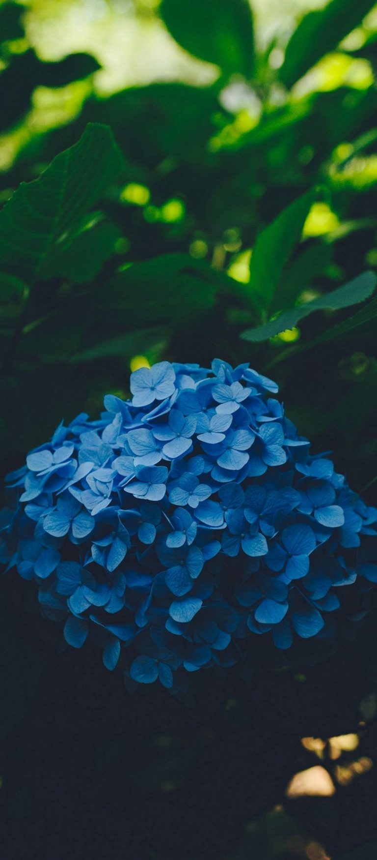 Blue Leaf Flower 1080x2460 768x1749