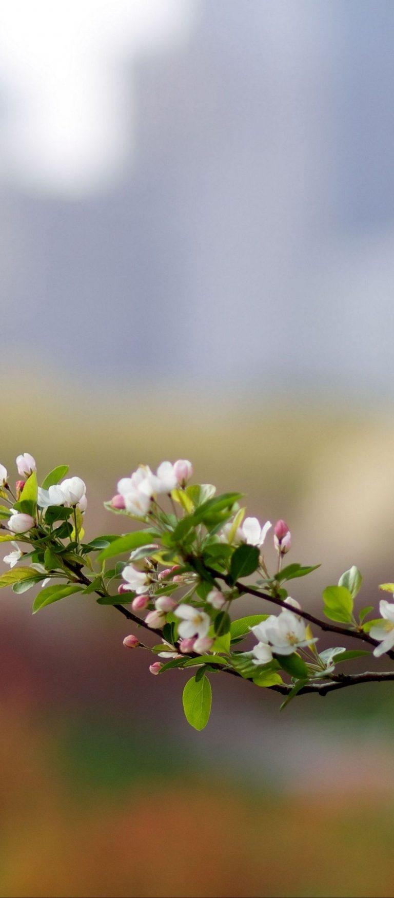 Branch Plant Bloom Spring 1080x2460 768x1749