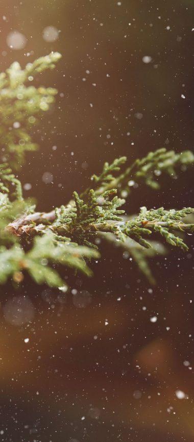 Branches Snow Glare 1080x2460 380x866