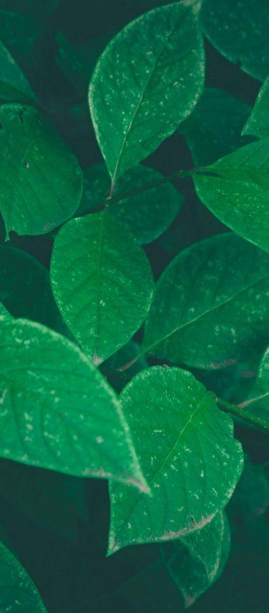 Bushes Leaves Herbs 1080x2460 380x866