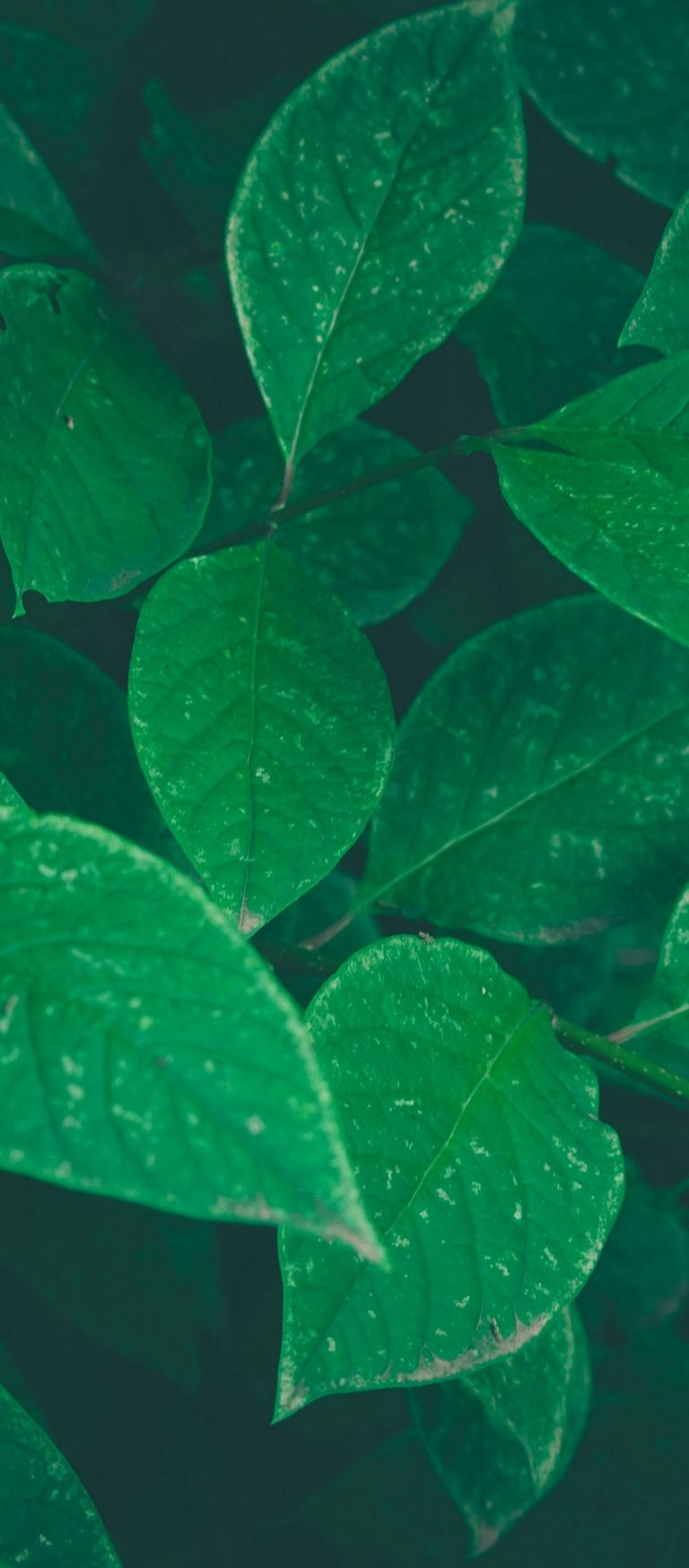 Bushes Leaves Herbs 1080x2460 768x1749