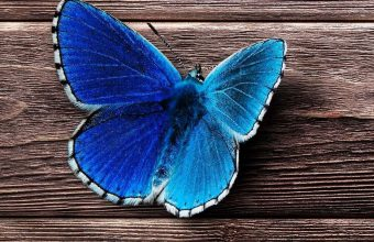 Butterfly Surface Wooden 1080x2460 340x220