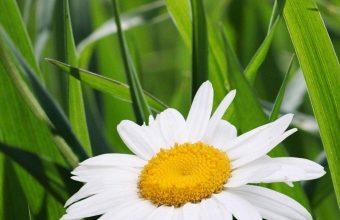 Daisies Flowers Grass Green Blur 1080x2460 340x220