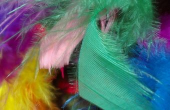 Feathers Background Colorful 1080x2460 340x220