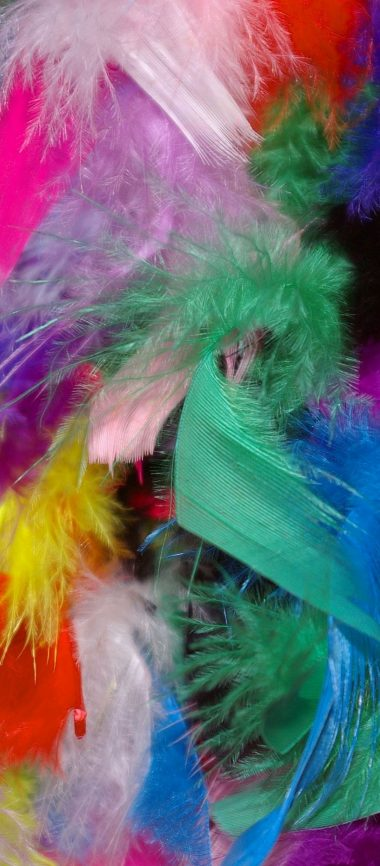 Feathers Background Colorful 1080x2460 380x866