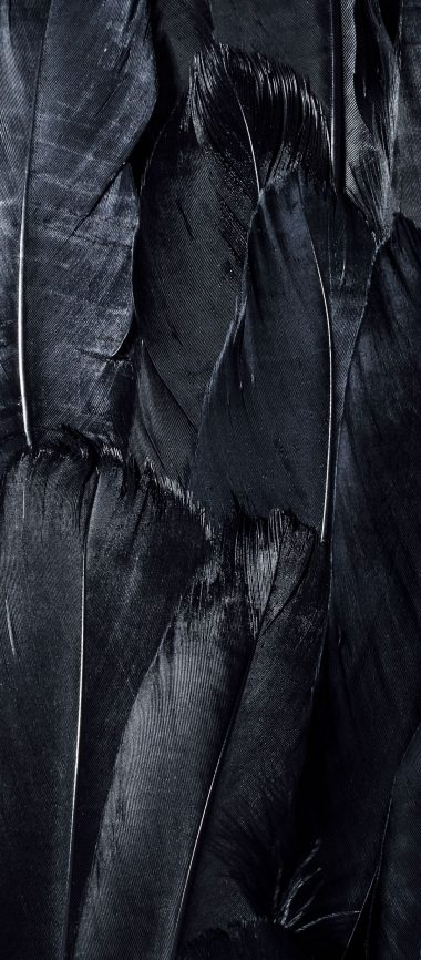 Feathers Black Dark 1080x2460 380x866