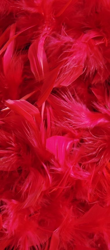Feathers Down Red 1080x2460 380x866