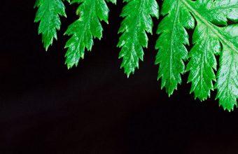 Fern Plant Leaf 1080x2460 340x220
