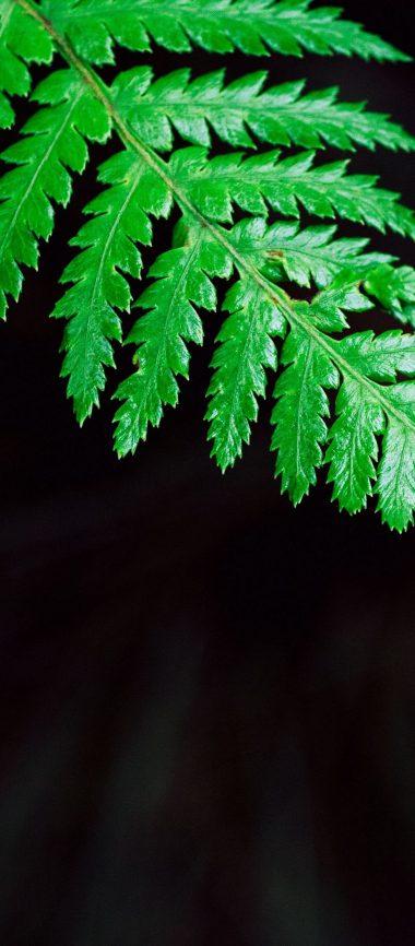 Fern Plant Leaf 1080x2460 380x866