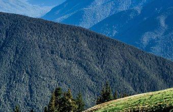 Field Grass Mountains Summer 1080x2460 340x220