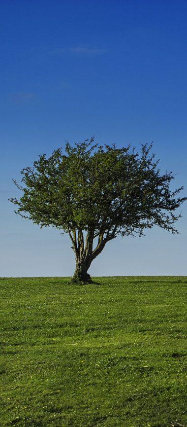 Field Sky Tree Grass Crown 1080x2460 380x866